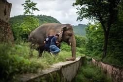Kaavan, o elefante mais solitário do mundo