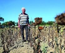 Manuel Fatana, agricultor, observa os girassoís secos