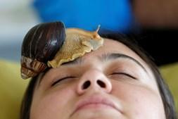 Um salão de beleza em Amã, na Jordânia, disponibiliza uma massagem de rosto com caramujos gigantes africanos, um molusco idêntico a uma caracoleta. O objetivo deste tratamento é aumentar o colagénio da pele.