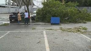 Vendaval deixa rasto de destruição em Beja