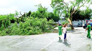 Vento forte provocou a queda de dezenas de árvores em Beja