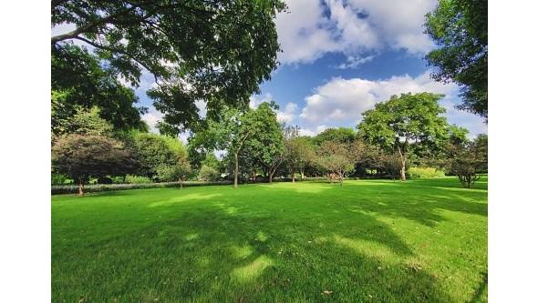 Espaços verdes protegem crianças de duas doenças, avança estudo