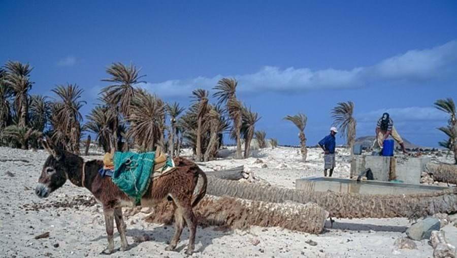 Burros invadem cidade na ilha cabo-verdiana da Boa Vista à procura de água e alimentos