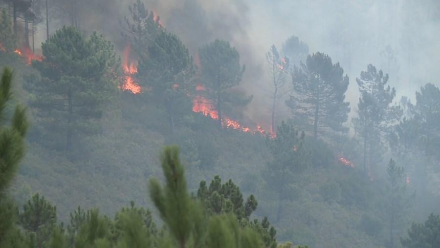 Incêndio de Proença-a-Nova alastra a mais dois concelhos