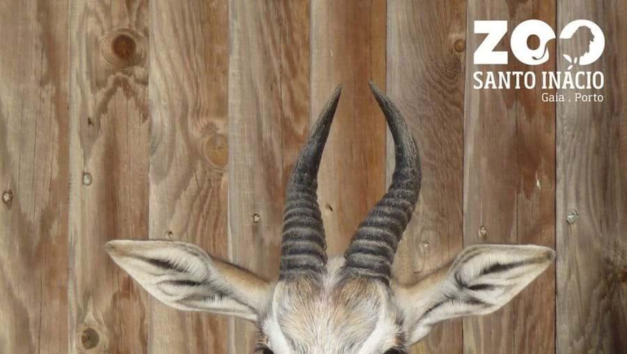 Gazela de espécie em extinção nasce no Zoo Santo Inácio