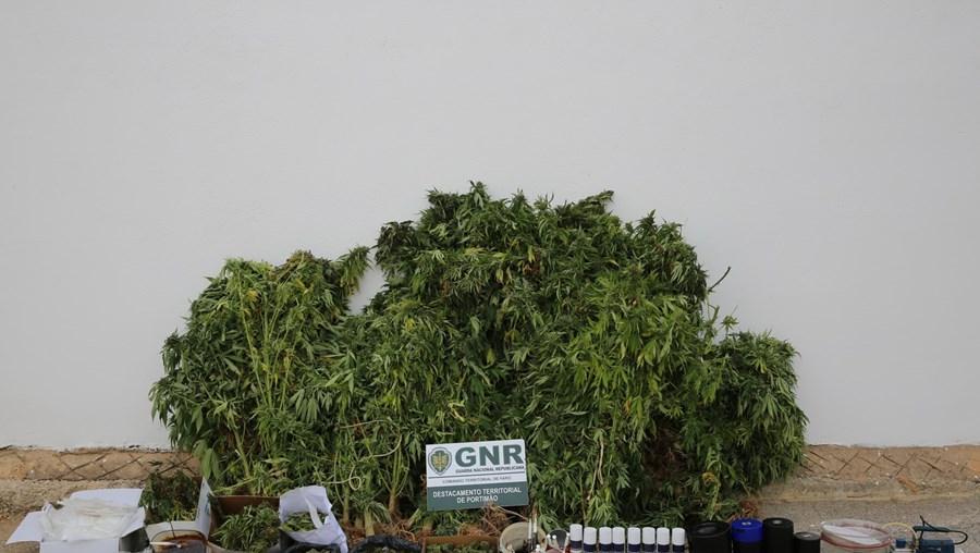 Detido duas vezes por cultivar droga em Aljezur