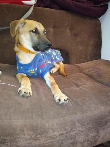 Chester, o cão resgatado