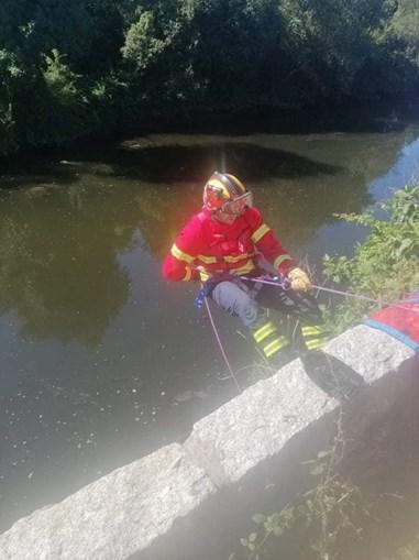 resgate, bombeiros Riba de Ave, animais, cães
