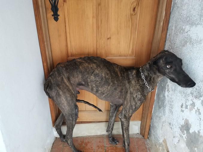 Animais vítimas de maus-tratos