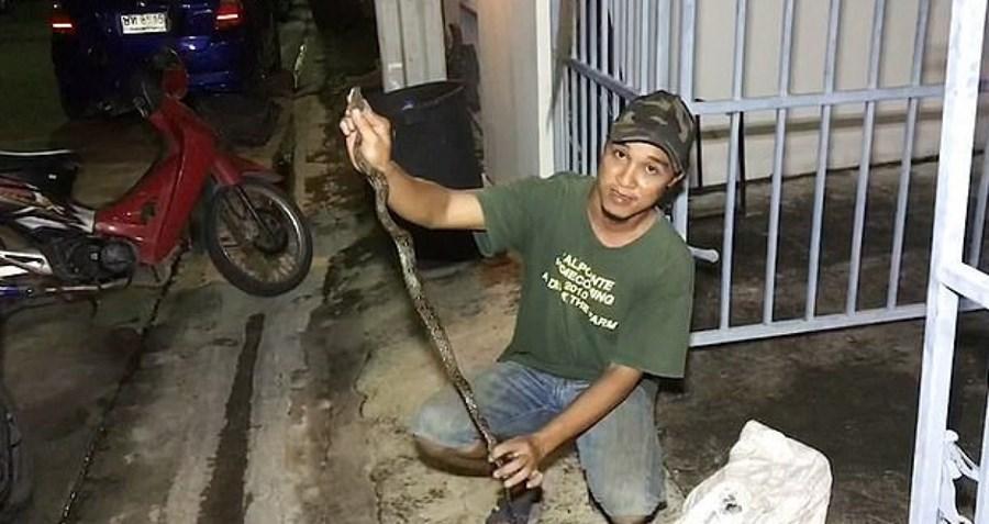 Cobra estava escondida na sanita