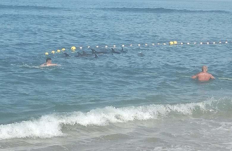 Golfinhos foram devolvidos ao mar, mas dois morreram