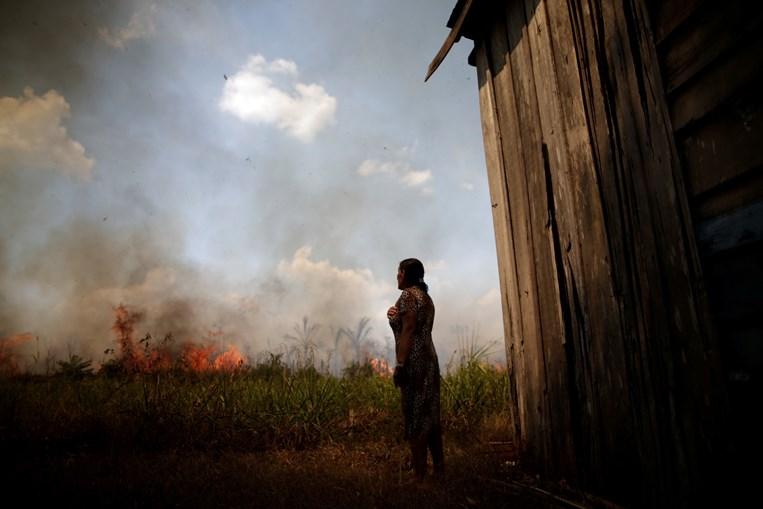 Desflorestação bate recorde na Amazónia