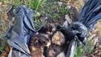 Gatos bebés abandonados em caixote do lixo dentro de saco de plástico em Lamego. Veja as imagens