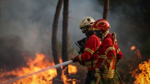 Mulher morre carbonizada em queima autorizada em Abrantes