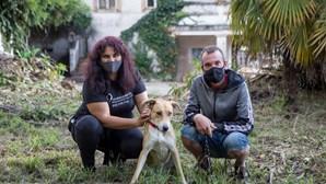 Sem-abrigo abdicou de alojamento em Santa Maria da Feira para não deixar cadela