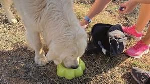 Cão fica dois dias ao lado de dono desaparecido em Lagoa