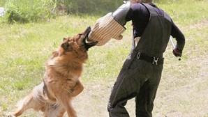 Ataques de cães fazem 509 vítimas desde 2018