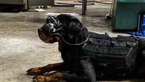 Exército dos Estados Unidos está a testar óculos de realidade aumentada em cães
