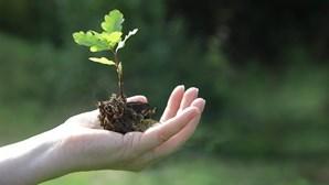 Capacidade das plantas para absorver dióxido de carbono pode vir a baixar para metade, revela estudo