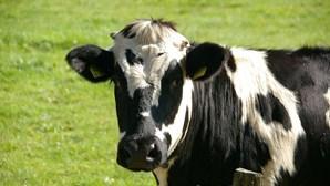 Agricultora acorda com vaca presa no trampolim do seu quintal