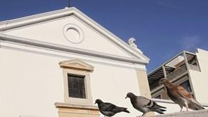 Perigo com armadilhas para pombos nas ruas de Faro