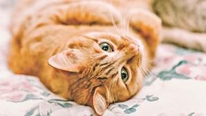 Quer ter uma boa relação com o seu gato? Aprenda a compreendê-lo