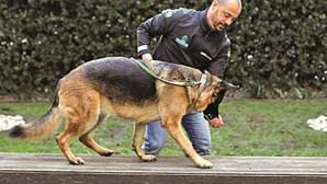 Cães mais felizes com estímulos certos: aprenda a treinar o seu amigo de quatro patas