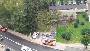 Queda de árvore em Miraflores devido ao mau tempo