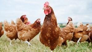 Faz sexo com galinhas enquanto mulher o grava e acaba condenado