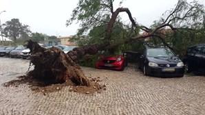 Tempestade 'Bárbara' provoca caos de Norte a Sul do País