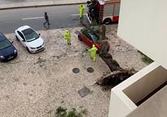 Árvore cai em cima de carro em Setúbal