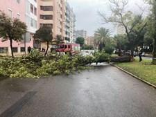 Em Faro, árvores cortaram via