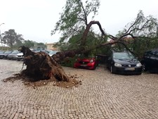 Em Setúbal, veículos ficaram destruídos
