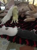 Nasceu um cão verde nas Filipinas e os donos chamaram-lhe Wasabi
