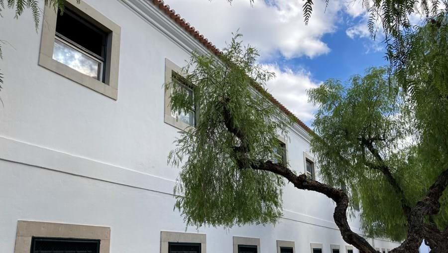 Janela e árvore usadas para a fuga dos migrantes ilegais