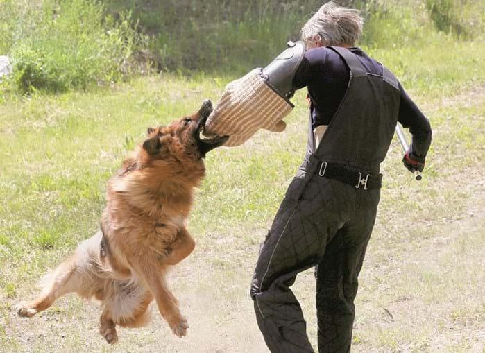 Treinadores credenciados em Portugal para o treino de cães perigosos são dez. Número considerado insuficiente por veterinários