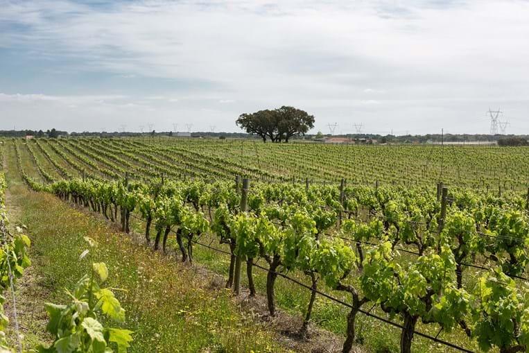 Situada entre duas reservas naturais, a do estuário do Tejo, a noroeste, e a do Sado, a sudoeste, a região de Pegões apresenta condições de vegetação privilegiadas para a vinha