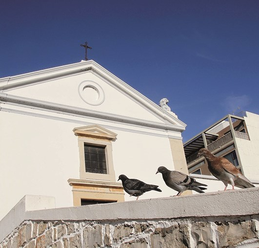 Pombos alimentam-se junto da capela de S. Luís