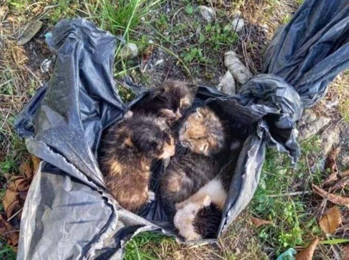 Gatos bebés abandonados em caixote do lixo dentro de saco de plástico em Lamego