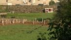 Terreno baldio em Viana do Castelo escondia ossadas
