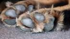Polícia alemã resgata cães à venda na Internet. Donos escondiam os animais dentro dos frigoríficos