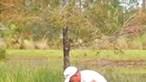 Homem resgata cão da boca de jacaré