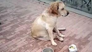 Cadela morre após ser violada por grupo de homens e esfaqueada 30 vezes