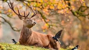 Veado rouba espingarda a caçadores na República Checa