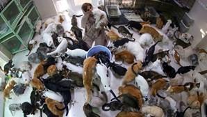 """Mulher vive com 480 gatos e 12 cães: """"Eles foram a tábua de salvação que me resgatou"""""""