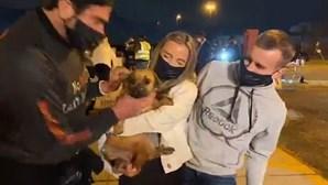 Mais de 30 cachorros salvos da morte em mercado de carne na China acabam adotados