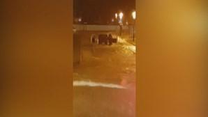 Carros submersos e estradas cortadas: Chuva intensa provoca inundações no Algarve