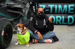 Lewis Hamilton surge ao lado do cão depois de ganhar o Grande Prémio da Turquia e garantir o sétimo título mundial