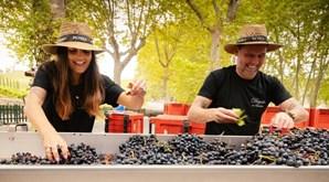 Maniche aventurou-se no mundo dos vinhos