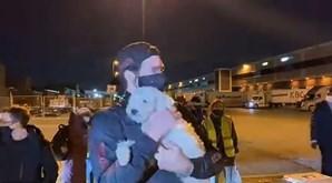 Associação salvou 34 cachorros